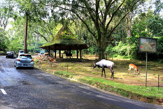 Taman_Safari_Indonesia